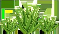 Online planten shop