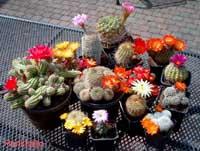 Cactus Winkels