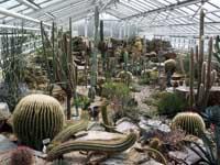 Cactus kwekerijen