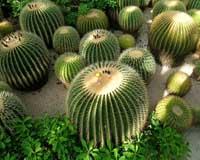 Cactusgeslachten