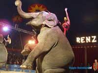 Circus Italie