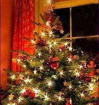 Kerstboom filmpjes