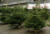 Soort kerstbomen