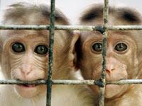 apen bescherming