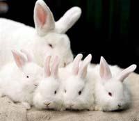 konijnen verenigingen